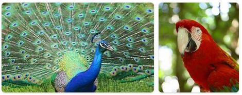 Jamaica Native Animals