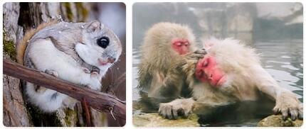 Japan Native Animals