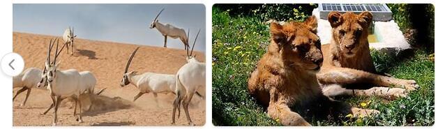 Jordan Native Animals