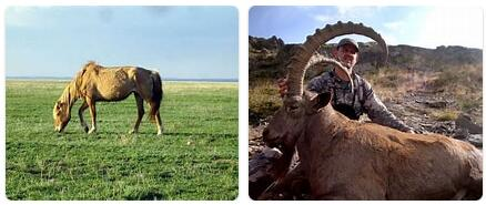 Kazakhstan Native Animals