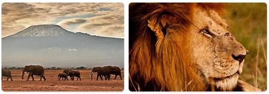 Kenya Native Animals
