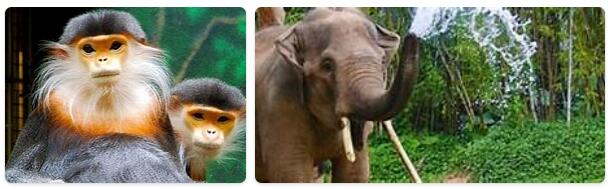 Laos Native Animals
