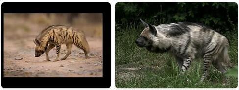 Lebanon Native Animals