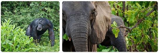 Liberia Native Animals