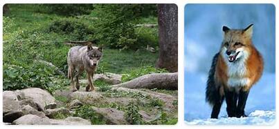 Liechtenstein Native Animals