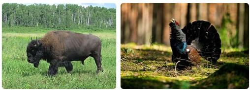 Lithuania Native Animals
