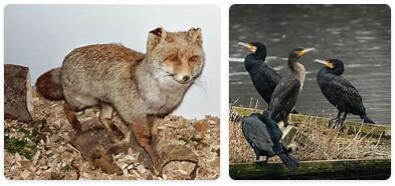 Luxembourg Native Animals