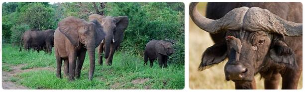Malawi Native Animals