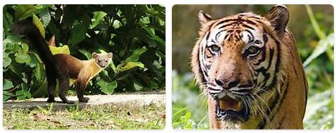 Malaysia Native Animals