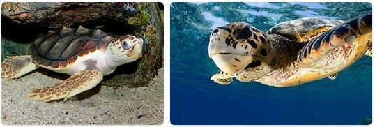 Maldives Native Animals