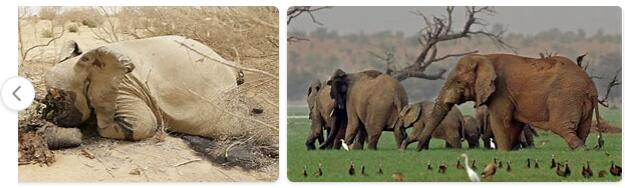 Mali Native Animals
