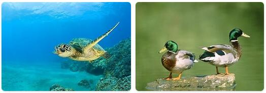 Marshall Islands Native Animals