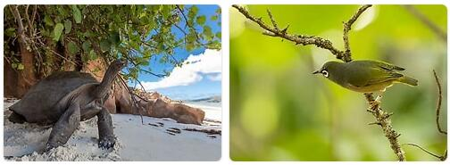 Mauritius Native Animals