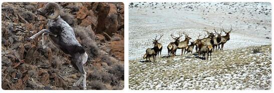 Mongolia Native Animals