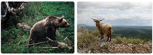 Montenegro Native Animals