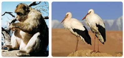 Morocco Native Animals