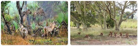 Mozambique Native Animals