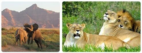 Namibia Native Animals