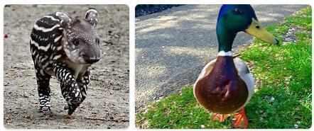 Netherlands Native Animals