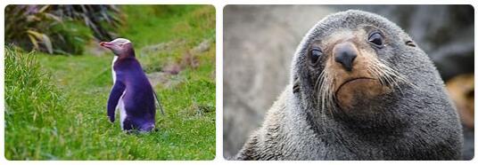 New Zealand Native Animals