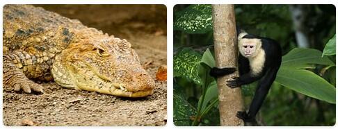 Nicaragua Native Animals