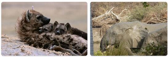 Niger Native Animals