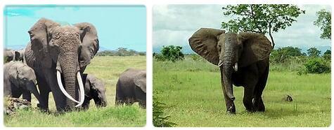 Nigeria Native Animals