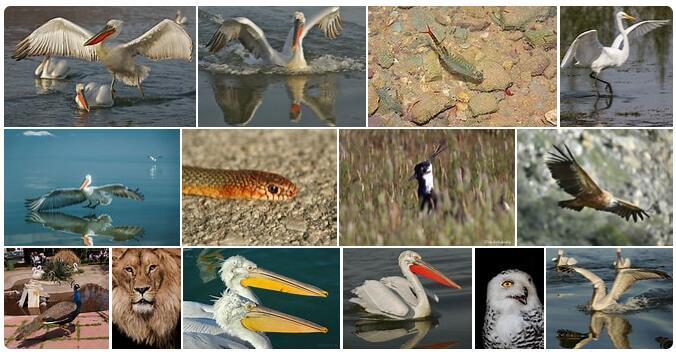 Northern Macedonia Native Animals