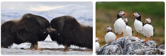 Norway Native Animals
