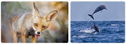 Oman Native Animals