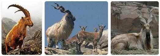 Pakistan Native Animals