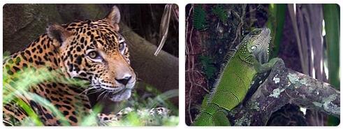 Panama Native Animals