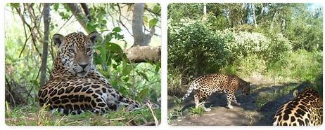 Paraguay Native Animals