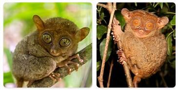 Philippines Native Animals