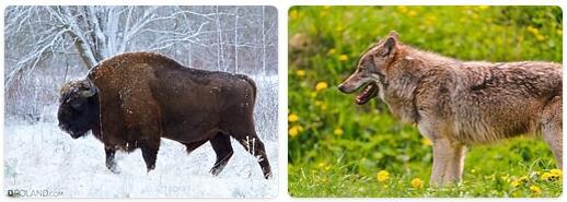 Poland Native Animals