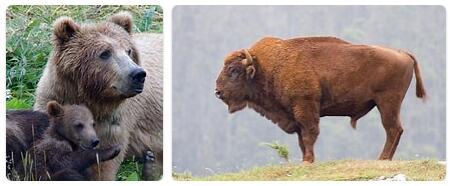 Romania Native Animals