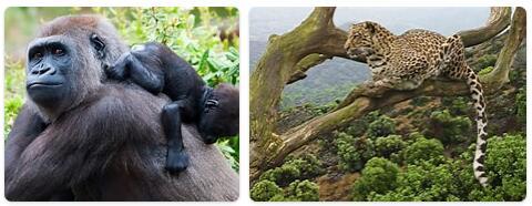 Rwanda Native Animals