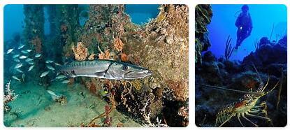 Saint Kitts and Nevis Native Animals