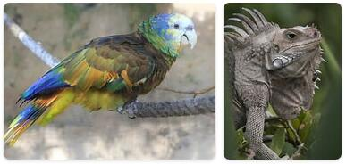 Saint Vincent and The Grenadines Native Animals