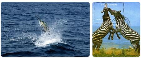 Sao Tome and Principe Native Animals