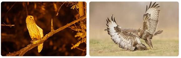Serbia Native Animals