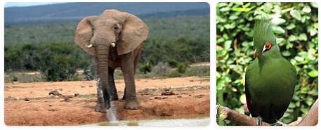 Sierra Leone Native Animals