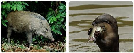 Singapore Native Animals