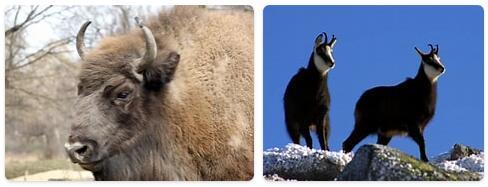 Slovakia Native Animals