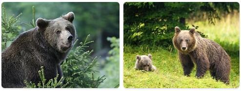 Slovenia Native Animals