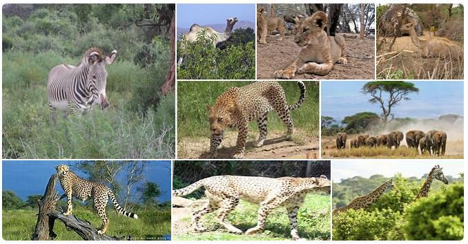 Somalia Native Animals