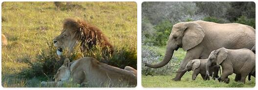 South Africa Native Animals