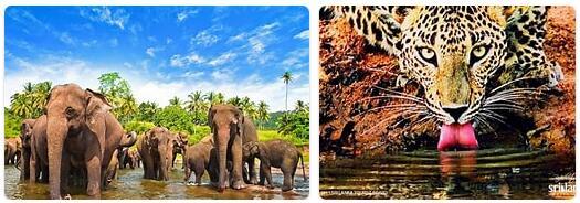 Sri Lanka Native Animals
