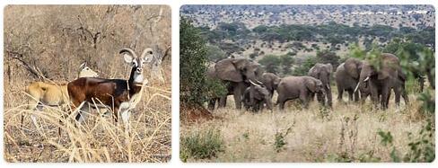Sudan Native Animals