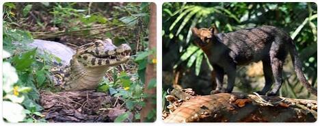 Suriname Native Animals
